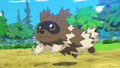 Youngster Zigzagoon ORAS Trailer.png